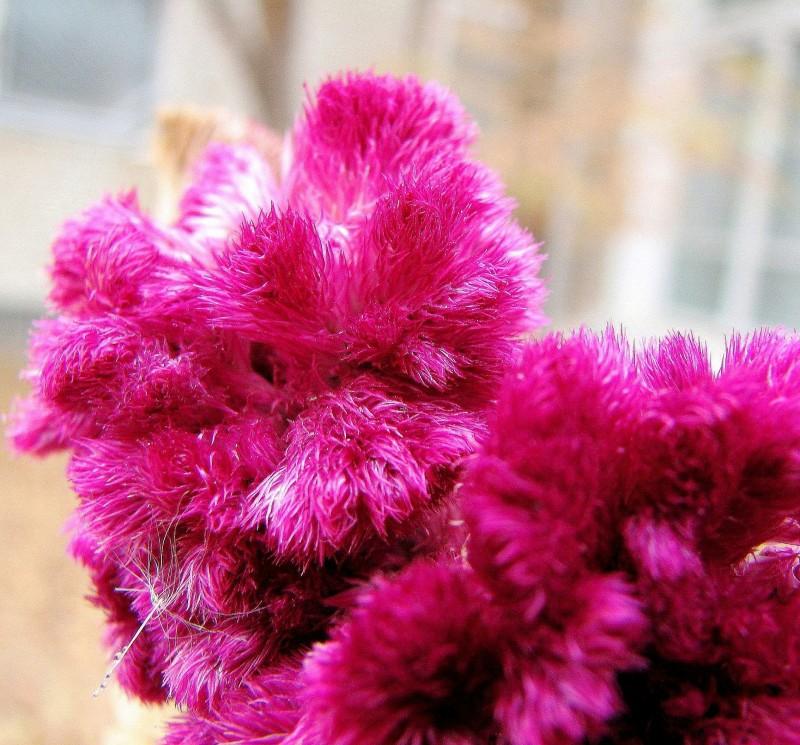 Плюшевый цветок