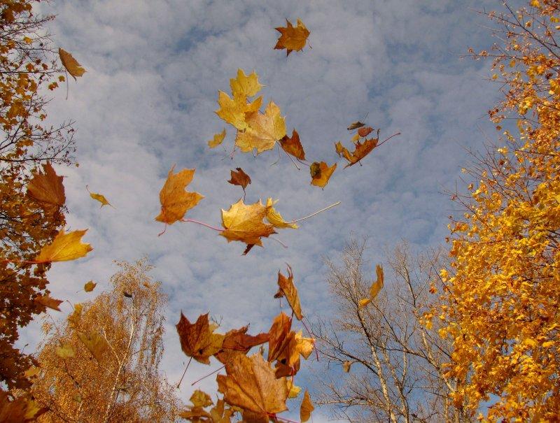 """""""Листья жёлтые над городом кружатся..."""""""