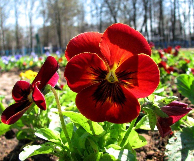 В город пришла весна