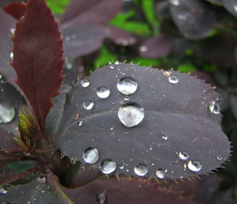 Бусинки весеннего дождя...