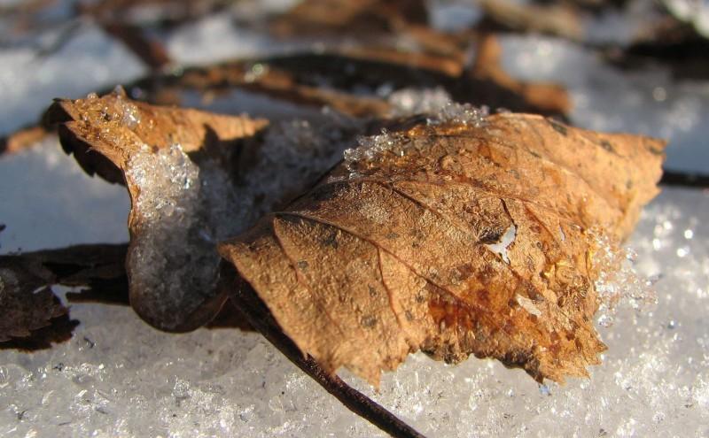 Зимний листопад
