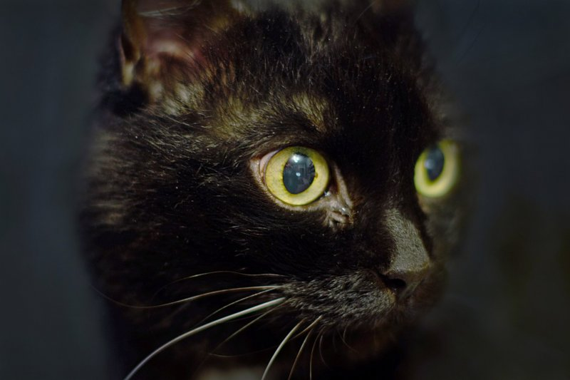 Взгляд кошки...