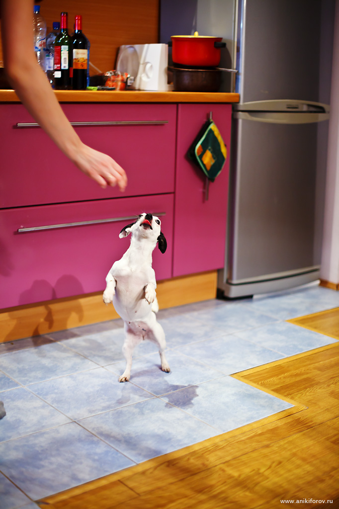 Собака просит лакомство