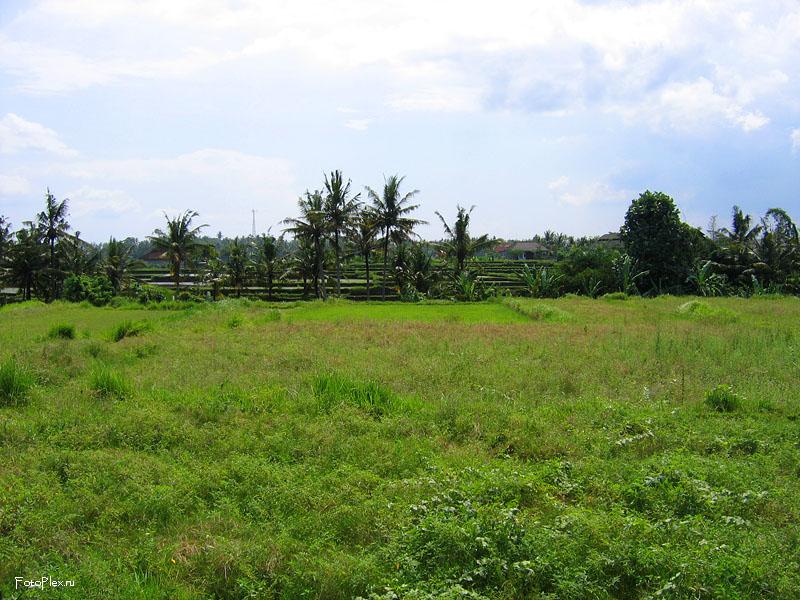 Пейзаж на Бали