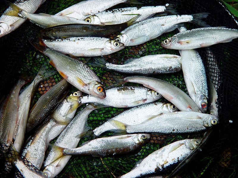 Рыба для Ухи