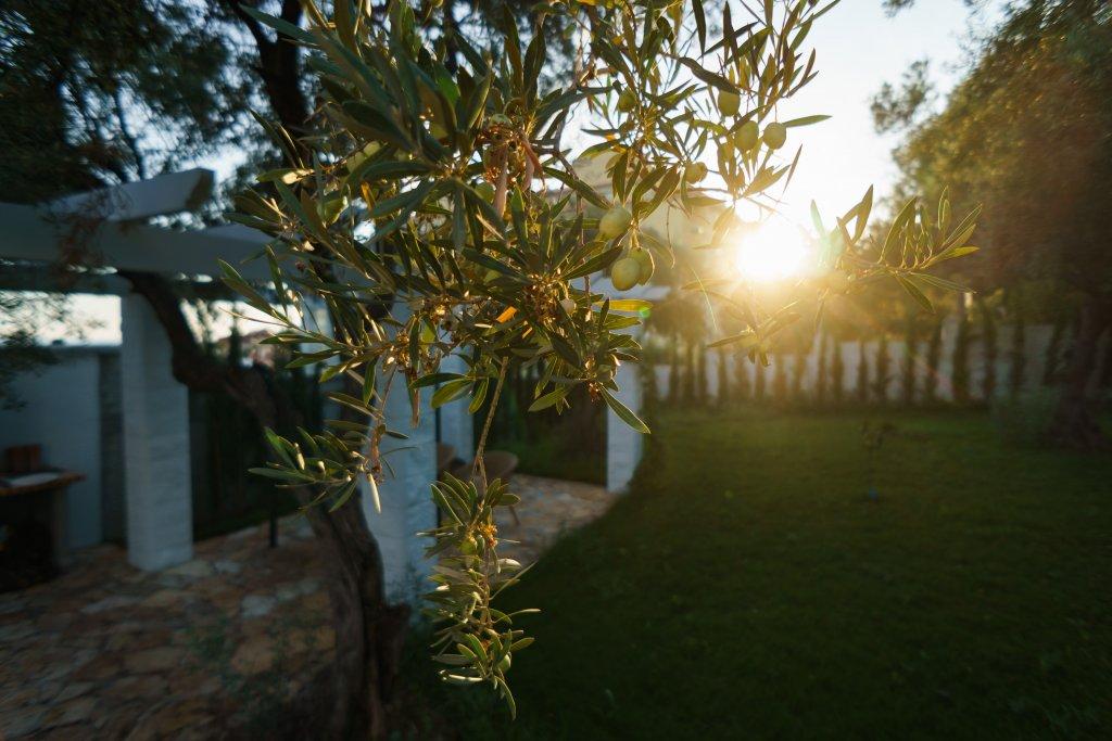 Ветвь оливы