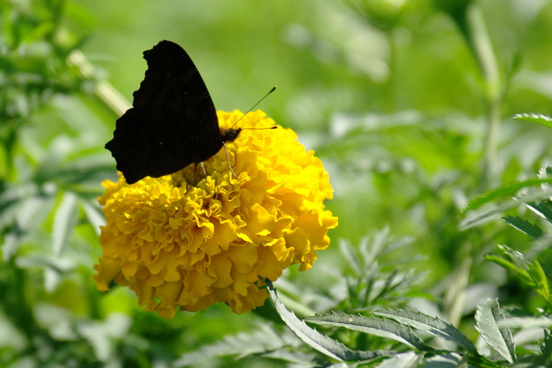 черное на желтом