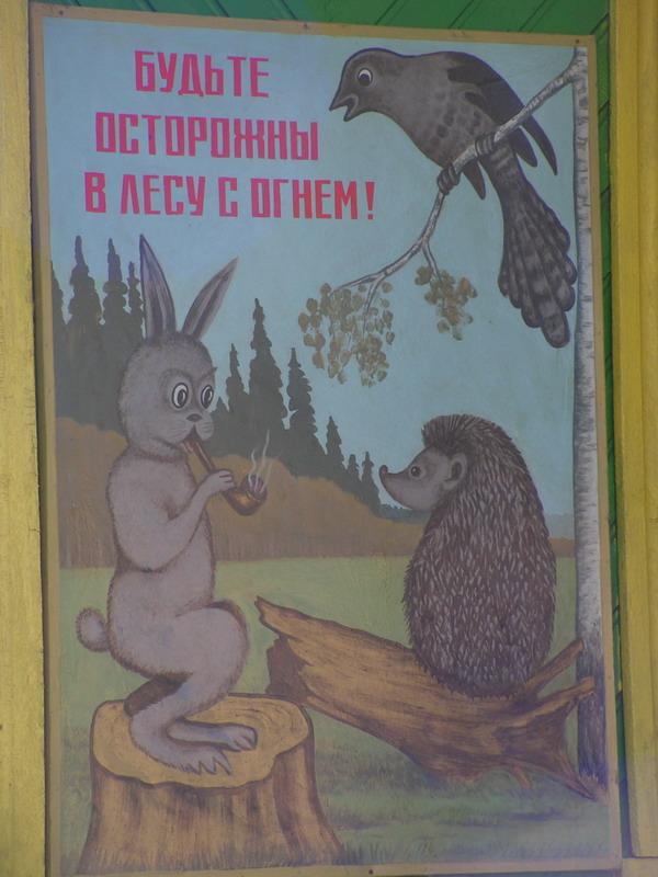 заяц - хороший пример для детей, чем можно заниматься в лесу!