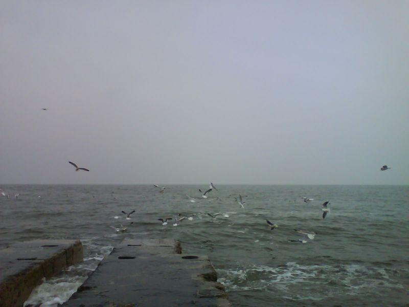 чайки 3