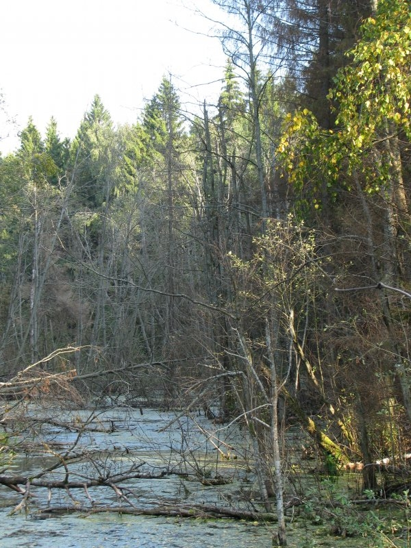 Река в густом лесу
