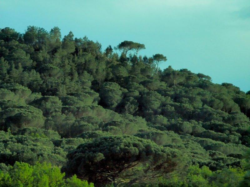 Вот такие вот *деревья*...!