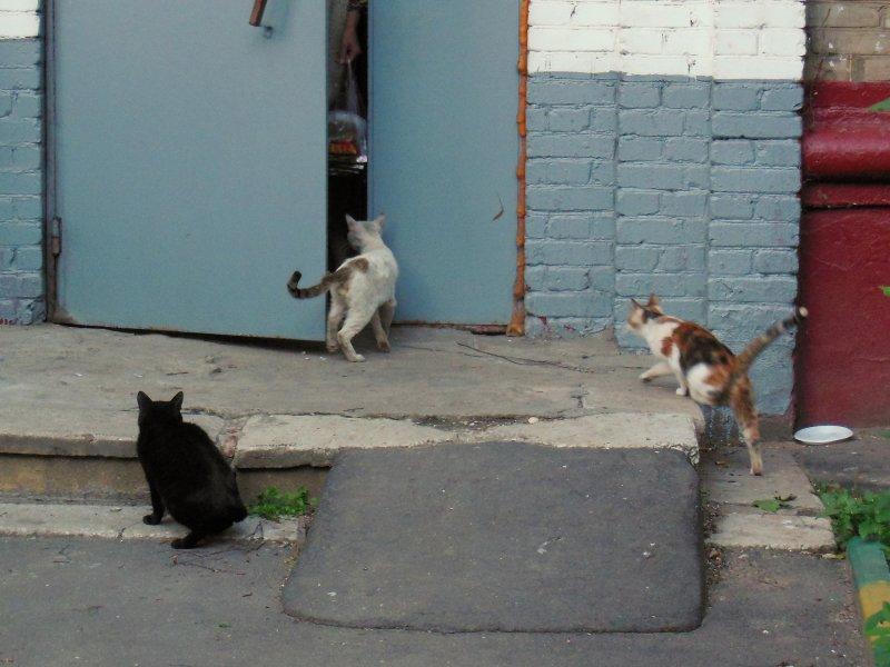 Любопытство сгубило кошку!