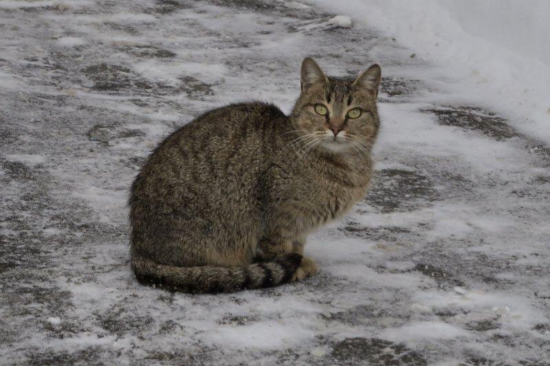 Уличный котик