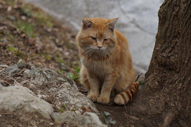 Грустный осенний котик