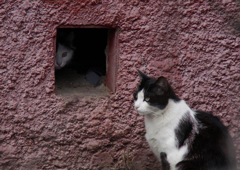 Кошаче-весенний сюжет