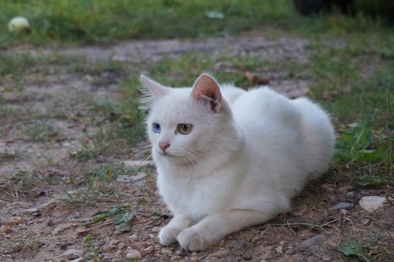 Белая кошка - эмблема Любви