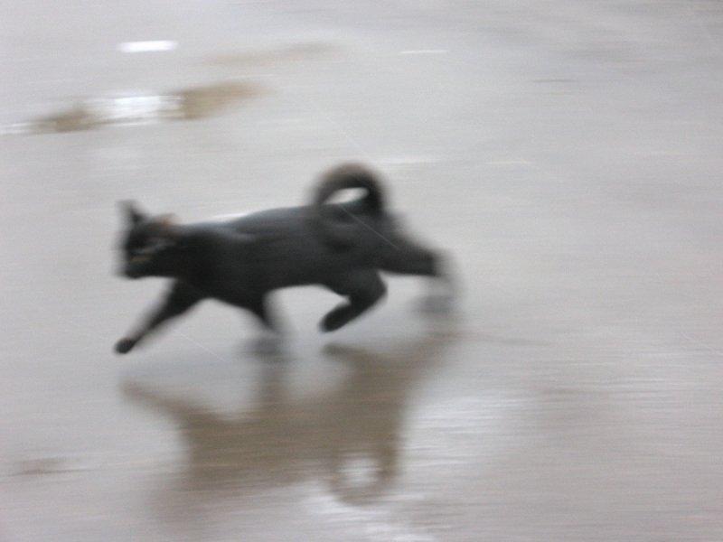 """Черный кот спешит наперерез (цикл """"Жил-да-был Черный кот за Углом"""")"""