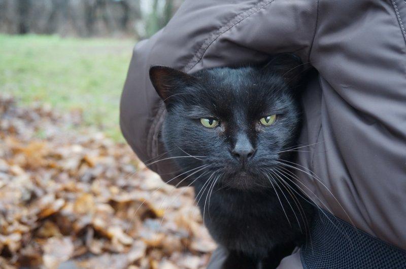 """Голова без кота (""""Жил-да-был Черный Кот за Углом"""")"""