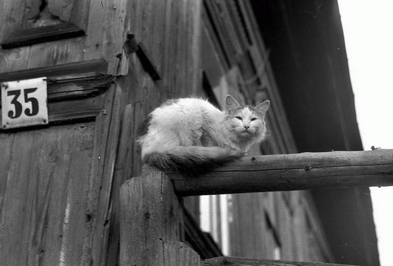 Драный дом - драный кот