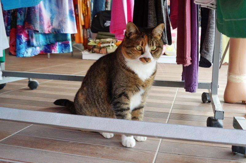 Котик из Алани