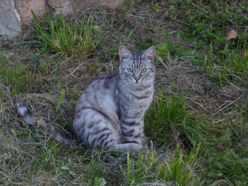 Стальной котик