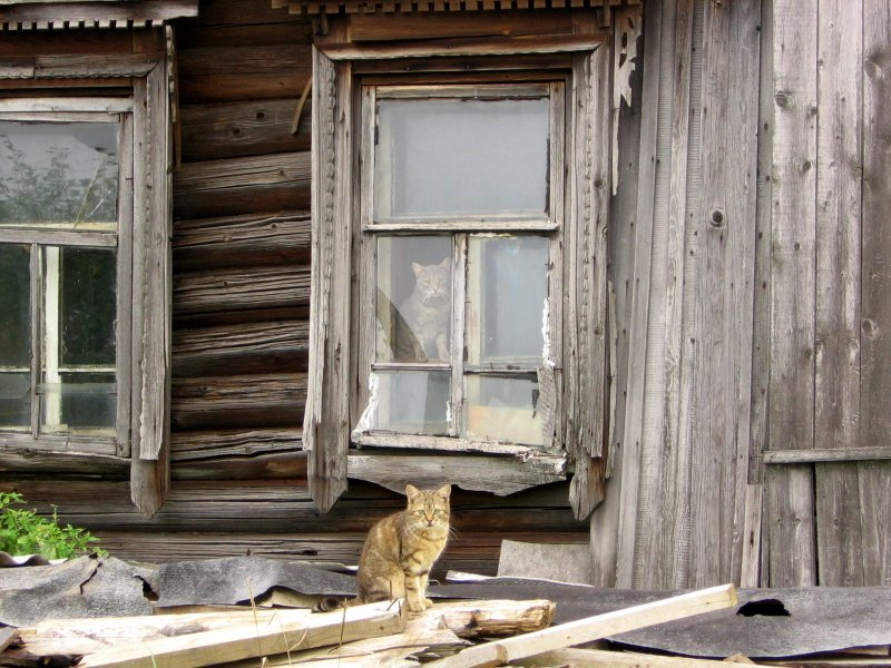 Тили-бом развалился кошкин дом