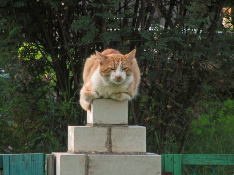 Какой кот? Я - памятник!