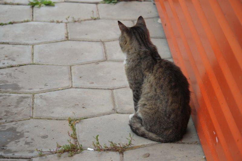 Обиженный котик