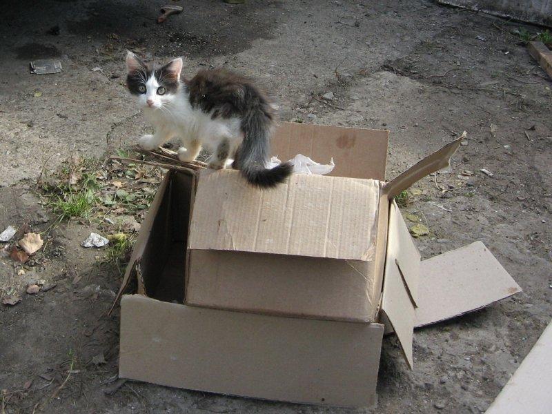 Помоечный котенок