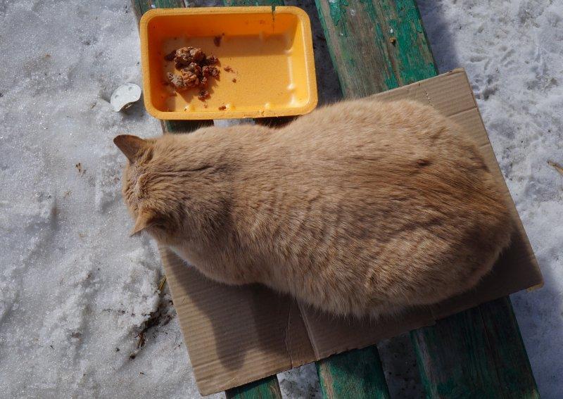 Эх! Хороша кошачья жизнь!
