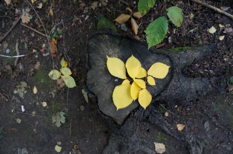 Осенний сюжет (желтый)