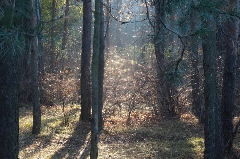 Осенняя мистерия