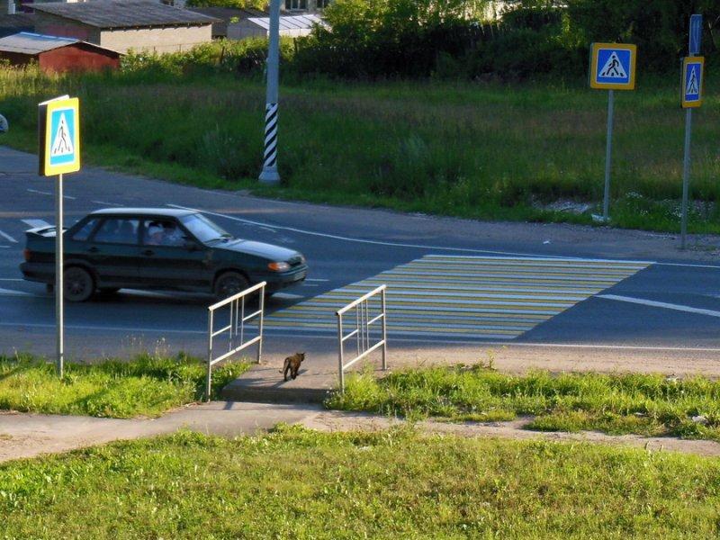 Кот идет на переход 2