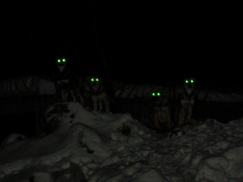 По ту сторону волков