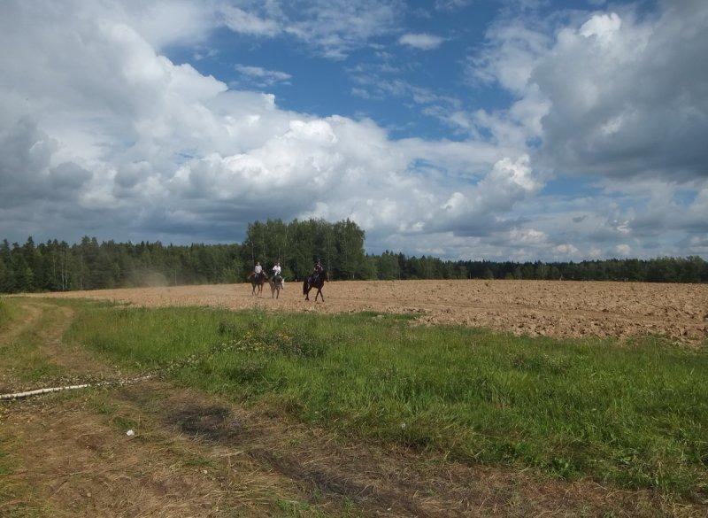 Легкая кавалерия (прокатные лошадки)