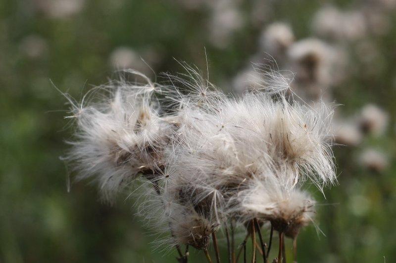 Уносимые ветром