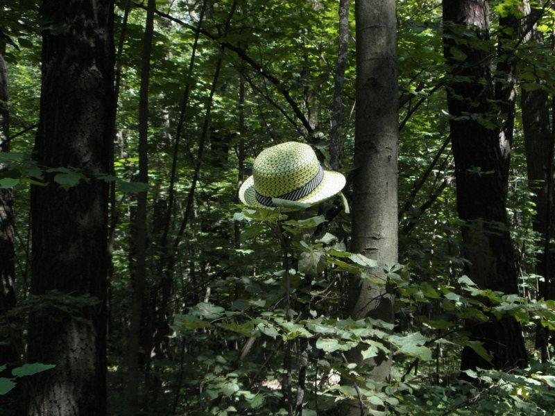 Лесная шляпа