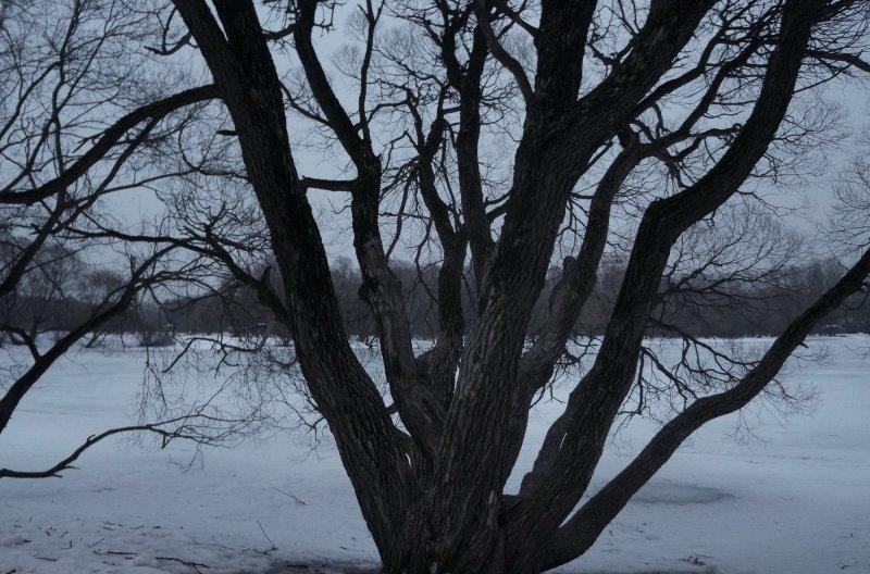 дерево над прудом