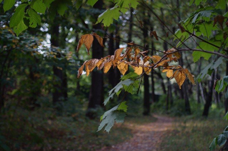 Осенняя прядь