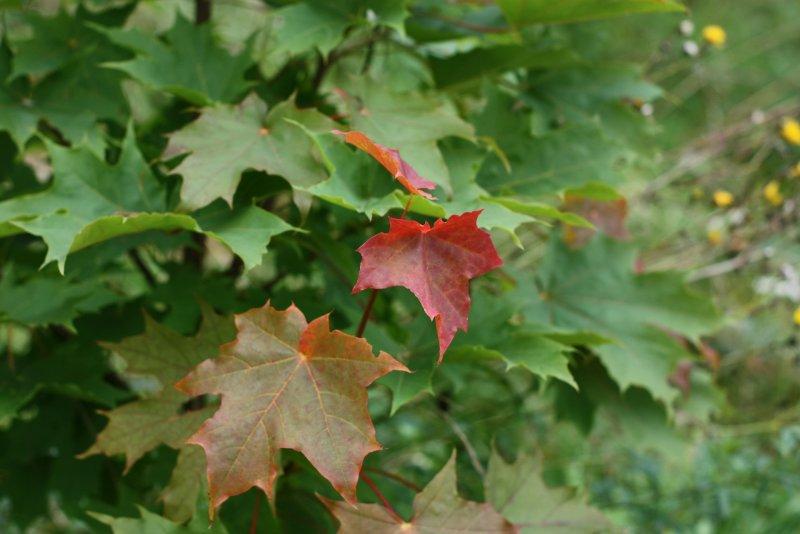 Цветные листики