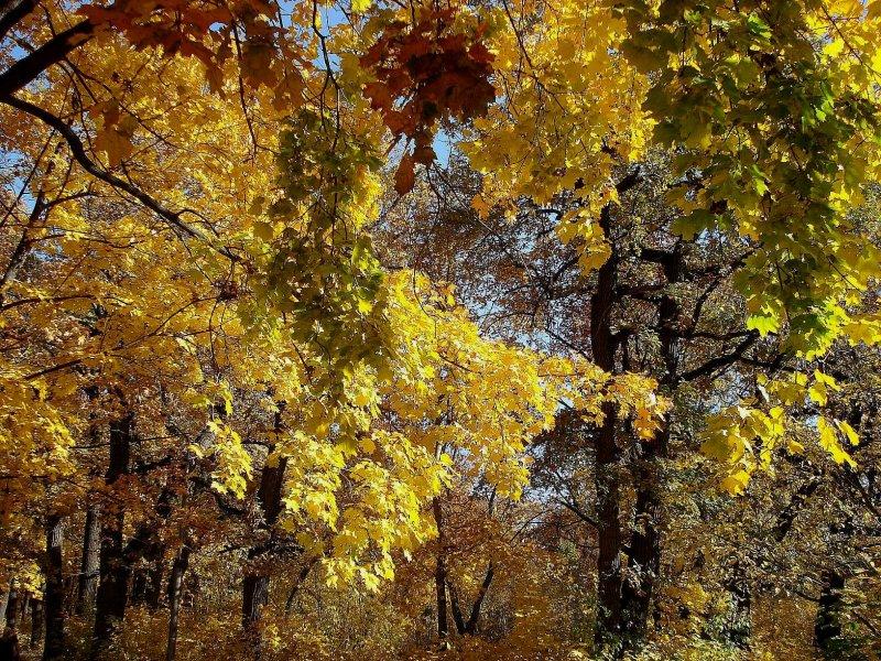 Осень в Загородном парке