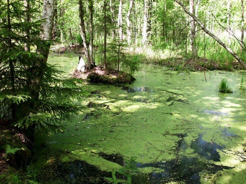 островок в болоте