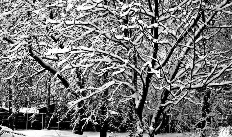 """В городе """"С"""" зима"""