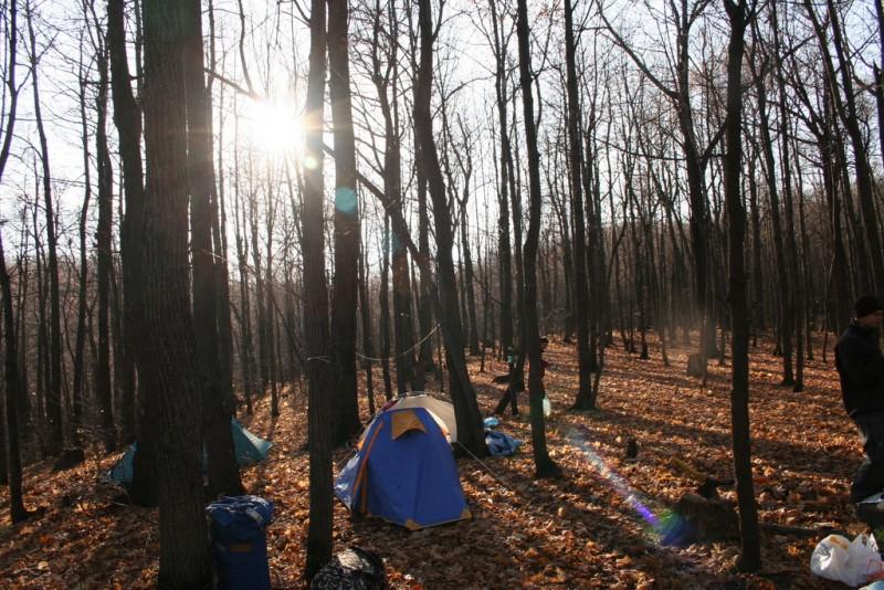 осенний лес и солнце