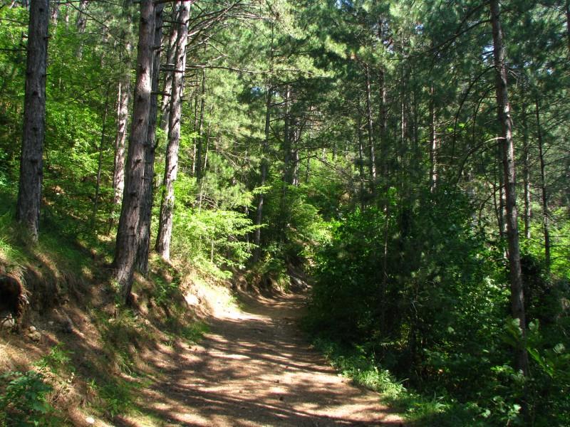 Хвойный лес (2)