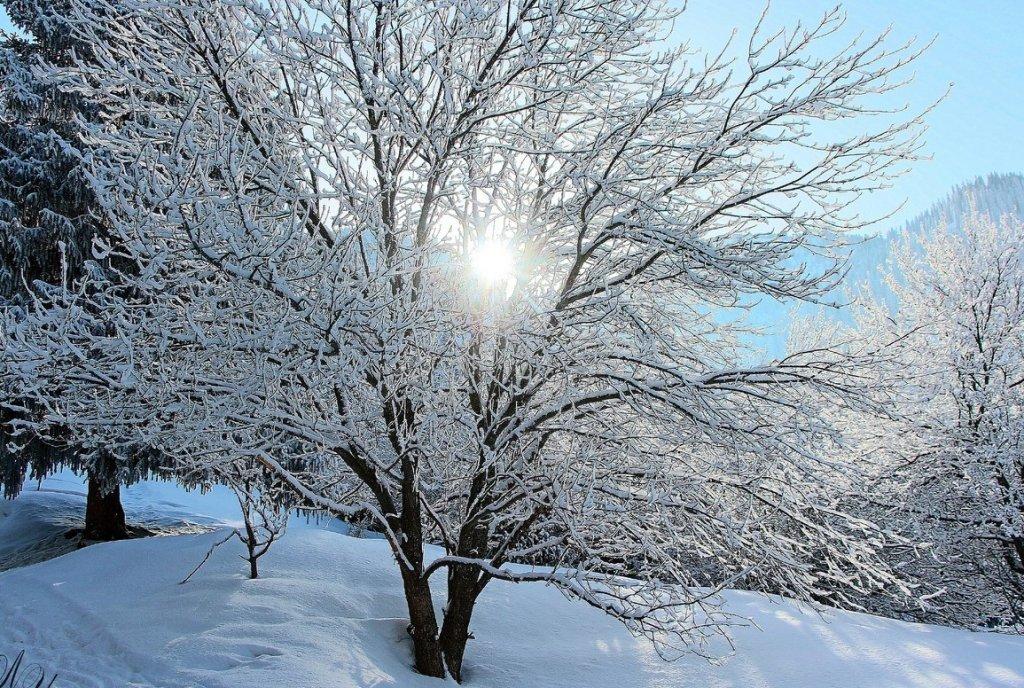 зимний день...