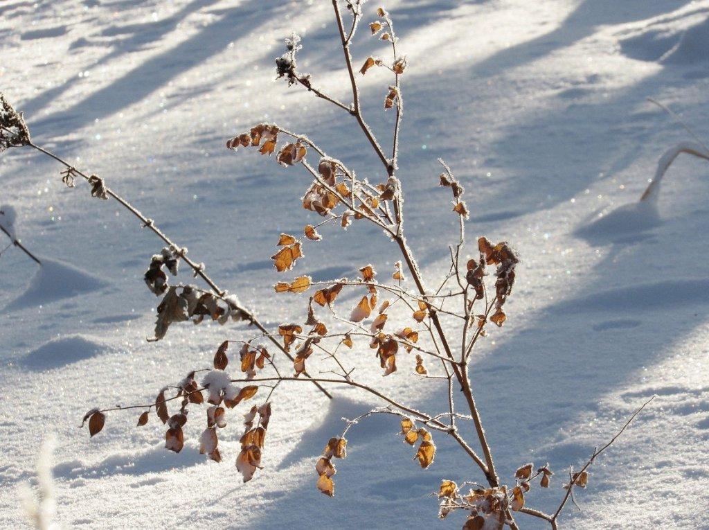 осенние листья в январе