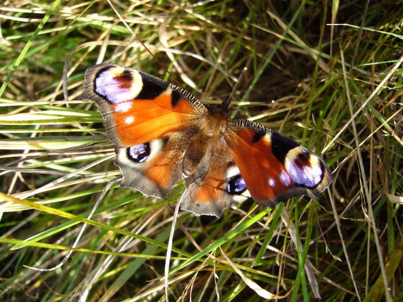 Бабочка (без обработки)