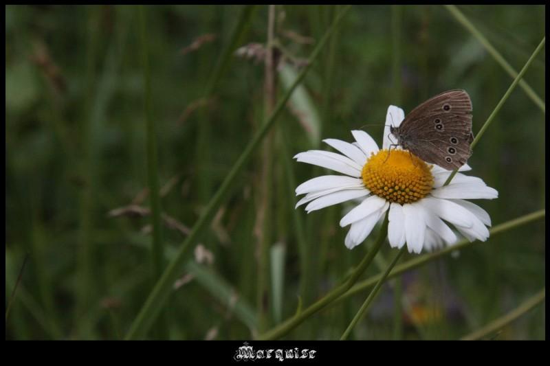 В продолжение темы о бабочках