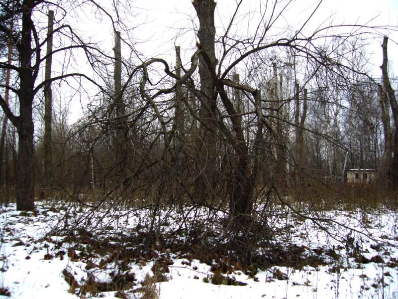 Дерево мертвецов